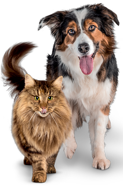 dog and cat tall